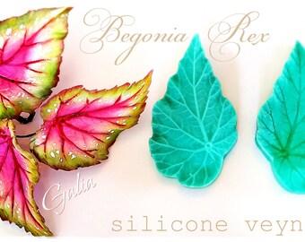 Begonia Rex... Silicone  Veyner