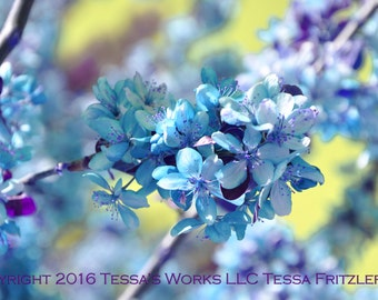 Blue Blossoms 8x10 glossy print