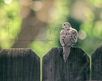 Mourning Dove Bird Nature Photography,Nature Print,Nature Photography,5x7,8x10,11x14,UNFRAMED,Bird Photography,Bird Print,Bathroom Art