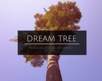 Dreamy Tree Stock Photo - Creative Use Stock Photography - Ethereal Pine Tree - Royalty Free Photo - Tree Stock Photo - Commercial Use Photo