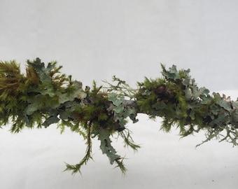 Live tree lichen  moss - lichen branch garden
