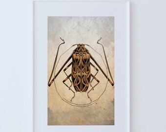 Vintage Beetle Illustration Natural History Print Vintage Illustrated Antique Beetle Giclee Cotton Canvas or Paper Canvas Wall Decor Art