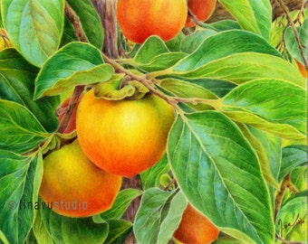 "Persimmon drawing. Color pencil drawing. Color pencil art Giclée print. persimmon print. Fruit print. 8""x10"" or 11""x14"""