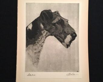 Vintage Wire Foxterrier Print, Original 1931 Etching by Bert Cobb, Portraits of Dogs