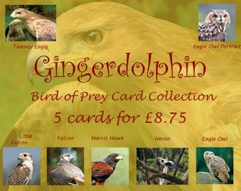 Bird of Prey Card Collection-choose your own from our original photographs of raptors