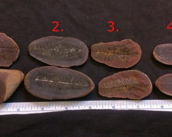 1 Pair of Plant Fossils AB5
