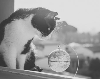Cat and world