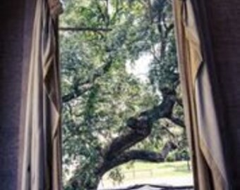 Room with a Tree