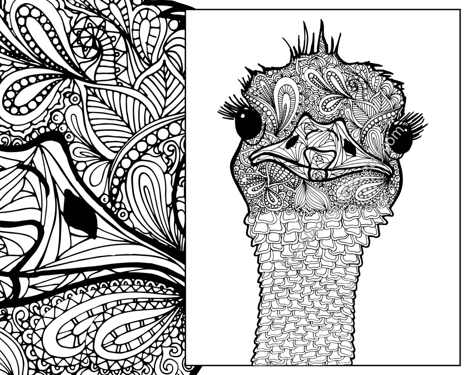 Animal Zentangle Coloring Pages : ostrich coloring sheet animal coloring pdf zentangle adult