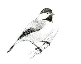Chickadee Illustration