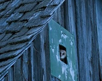 Barn Owl Print - Owl Photography - Wall Art