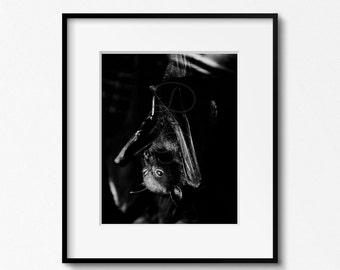 Bat , Bat Photography , Animal Print , Animal photography , Batman , Fine Art Photography , Nature Photography , Vampire , Halloween