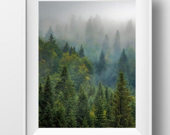 Forest, Forest print, forest photography, forest wall art, nature prints, nature photography, woodland decor, tree print, forest photo