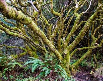 Entangled Tree Print