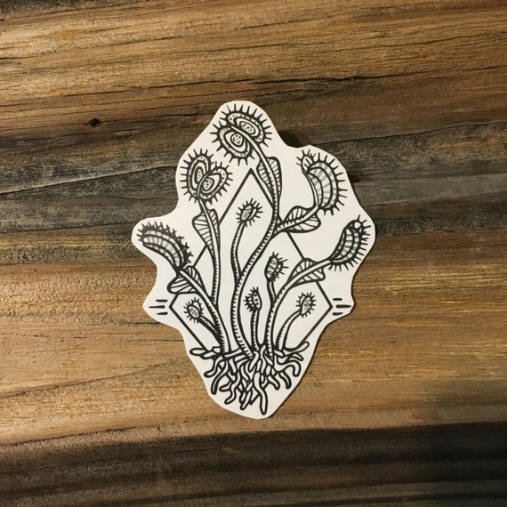Venus Flytrap Temporary Tattoo, Black Ink Tattoo Design, Carnivorous Plants, Botanical Drawing, Diamond Geometric Design, Nature Tattoo
