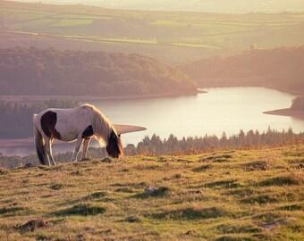 Dartmoor Pony, England - Fine Art Print by Meleah Reardon