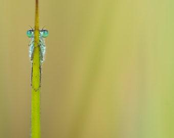 Damselfly / Dragonfly is hiding behind grass (digital download)