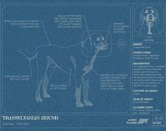 Animal and Pet Blueprints