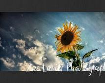 Sunflower Photo, Sunflower Image, Nature Photo, Natural Photo, Flower Photo, Summer Sunflower, Wall Art, Wall Decor, Printable Sunflower Art