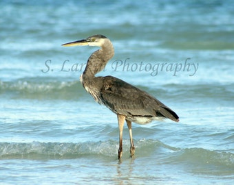 blue heron photography heron photography bird photography nature photography wildlife photography beach photograph ocean photography beachy