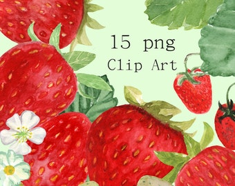 15 Hand-Painted  Watercolor Strawberries Clip Art