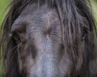 The Horse Look