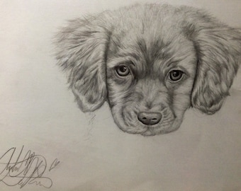 Custom dog pet portrait, pencil drawing from photo picture
