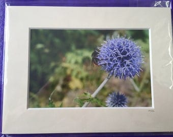 Mounted Thistle/Bee Photo