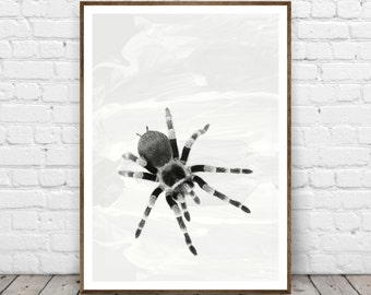 Tarantula Print, Spider Wall Art, Minimal Wall Art, Black and White Home Decor, Theraphosidae Spider Print, Spider Lover Printable Gift