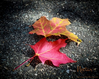 Landscape photography, Fine Art photography, Autumn, The Great Outdoors, leaves,wall art