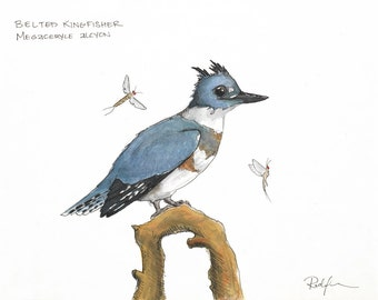 Print of Belted Kingfisher watercolor