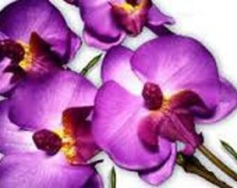 Phalanopsis  Artificial Silk Orchid Flower