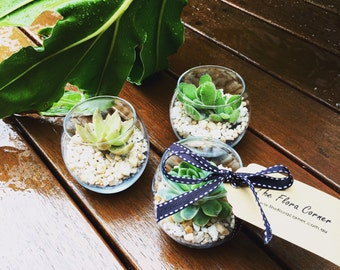 20 Succulents Wedding Favours Wedding Bombonieres