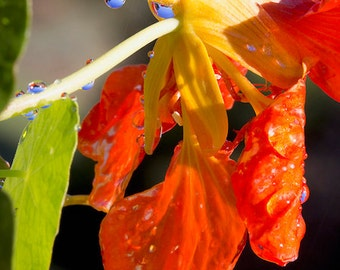 Drop Tropica Flower Nature Photography Print