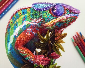 Colored Pencil Chameleon Drawing