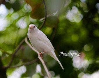 Nature Photography - White bird