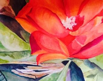Hemingway House, Key West flower