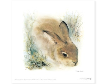 Hare fine art print, watercolor, 8,3 x 8,3 inch, limited edition, painted by Klaus Meyer-Gasters