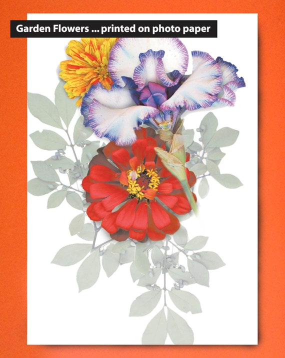 """Flower garden prints on paper. 8""""x10"""" and 11""""x14"""". Garden flowers that last. Iris and Zinnia on photo paper. Sized for standard framing."""
