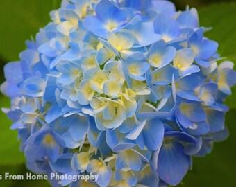 Blue & Yellow Flower Print + Mat