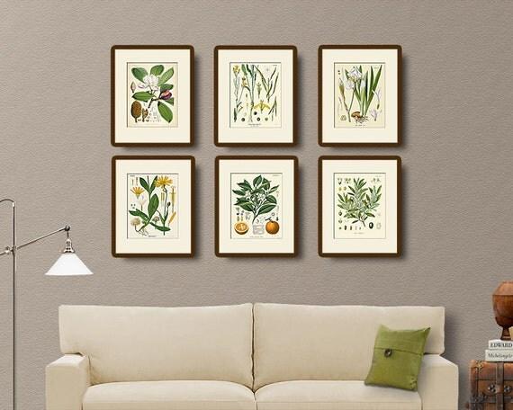 Vintage Botanical Print Set No. 1, Natural History Illustration, Victorian, Wall Art, Wall Decor, Multiple Sizes