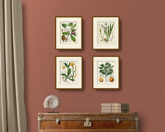 Vintage Botanical Print Set No. 2, Köhler, Natural History Illustration, Victorian, Wall Art, Wall Decor, Multiple Sizes