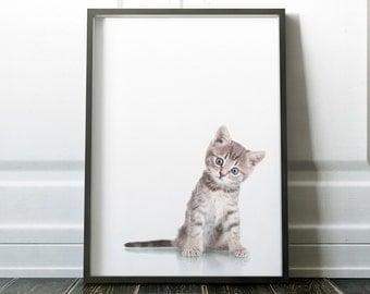 Kitten Prints, Photography Wall Art, Minimalist Prints, Minimalist Art, Kitten Photography, Animal Prints, Modern Art, Animal Photography