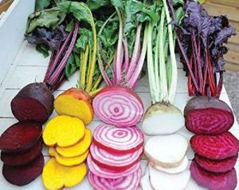 Rainbow Beetroot 50 Seeds- Exciting mix of colours and verieties