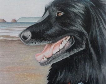 Lottie-sample dog portrait