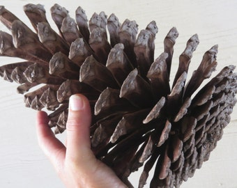 "10-11"" Jumbo Pine Cone, Large Pine Cone, Jumbo Pinecone, Large Pinecone, Huge Pine Cone, Huge Pinecone, Pine Cone Craft, Pinecone Decoration"