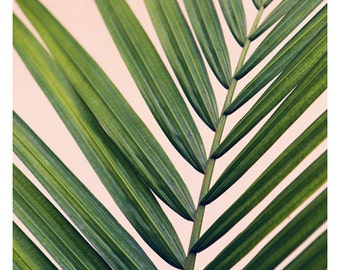 Nature Photograph - Palm Tree Print - Tropical Print - Botanical Photograph - Her Majesty 1- Fine Art Photograph - Plants On Pink - Wall Art