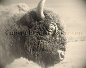 Buffalo Bison Head. Black and White. Original Digital Photograph. Wall Art. Wall Decor. Giclee Print. BIG WOOLY by Mikel Robinson