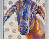 "Original Nubian Goat Oil Painting 10""x10"" with hemlock frame"