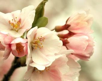 Cherry Blossom Photo, Digital Print, Bedroom Decor, Digital Download, Pink, Instant Download Photography, Bedroom Wall Art